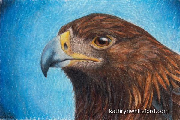 Colour Pencil: Lisa's Eagle