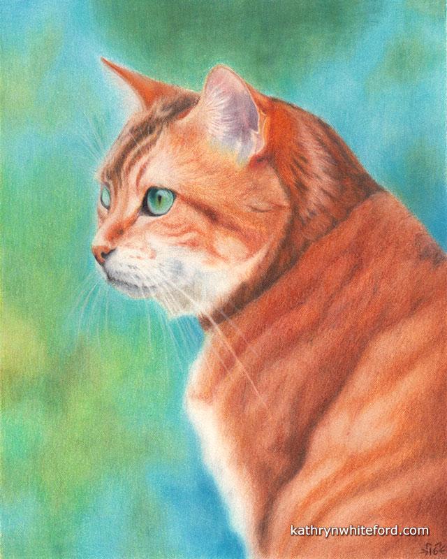 Colour Pencil Cat Portrait