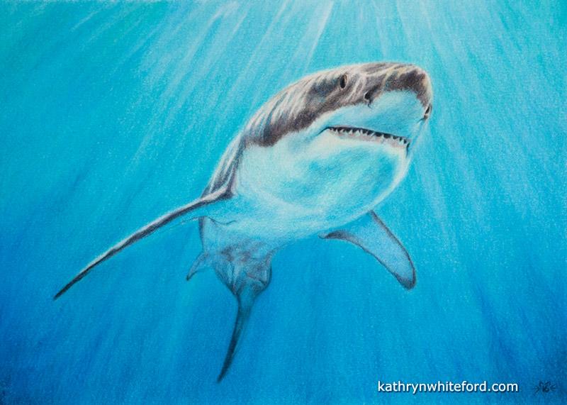 Luminance & Polychromos Colour Pencil Shark